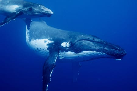 The Whales Call