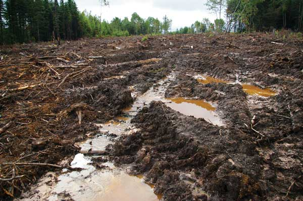 Forestry occurs on both private and public land. In NS, almost 80 per cent of public land is unprotected—and open to clearcutting, leaving an exposed wasteland as shown at top. Some kind of forest will grow back, but it will have less diversity of plant and animal species.