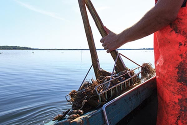 Food from fields and sea is at the heart of PEI.