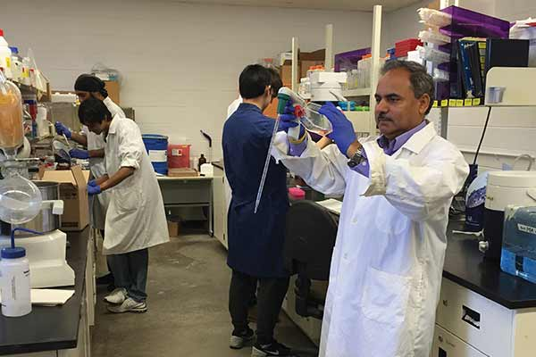 Dr. Siyaram Pandey, a biochemist from the University of Windsor, has developed a concentrated dandelion root extract that has been approved for trial by Health Canada.
