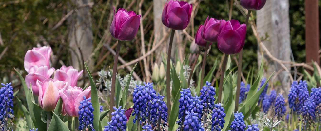 Plant spring-flowering bulbs now. Come spring, you'll be glad you did.