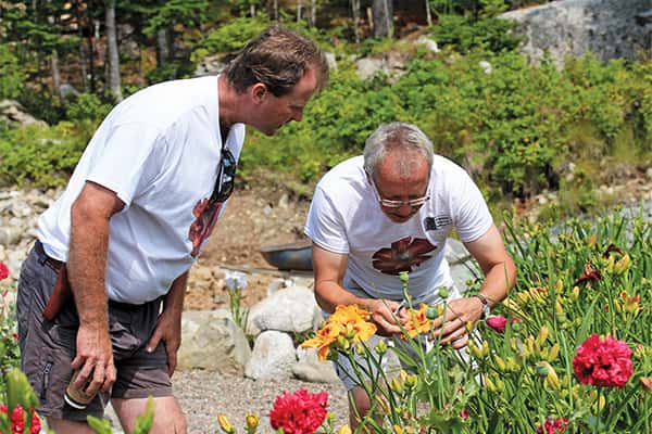 Allan Banks who enjoys hybridizing daylilies, shows seedlings of daylily 'Robert W. H. Baldwin' to its namesake, fellow nursery operator Rob Baldwin.