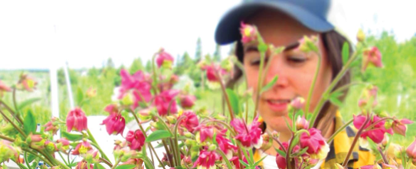 Shannon harvesting flowers for the market.