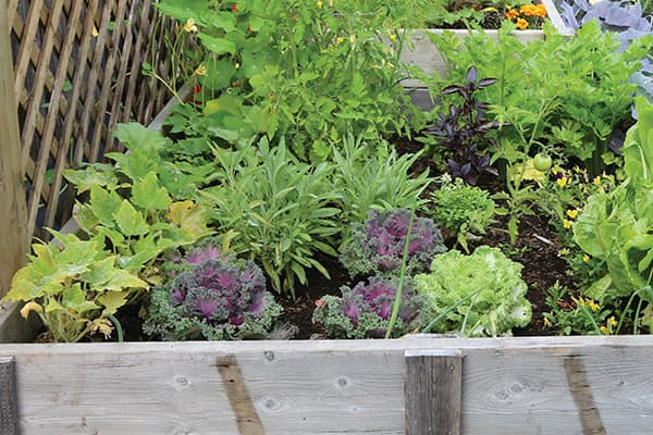 A host of vegetables are planted in a large wooden container.