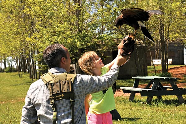 Fun with Falcons, one of 22 Experience PEI programs.