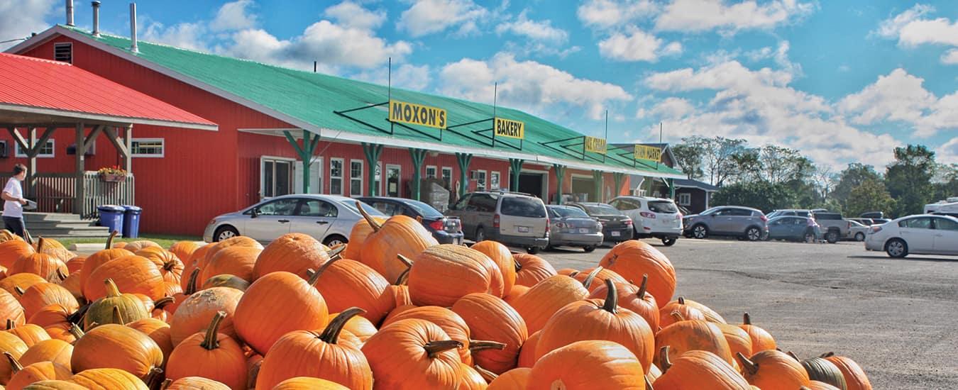 Pumpkin pile at Moxon's Farm Market