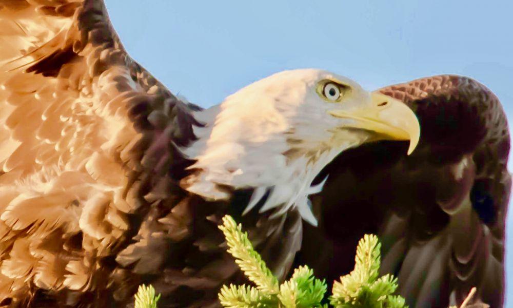 """Majestic Bird"", by Frank Falzett. Taken at Indian River, PE."