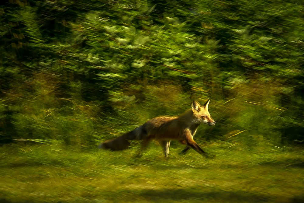 """""""On the Run"""", by Coleen Ramsay. Taken at Janeville NB."""