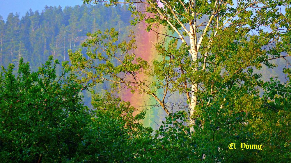 """""""Rainbow Through The Trees"""", by Elva Young. Taken at Oak Haven, N.B.."""