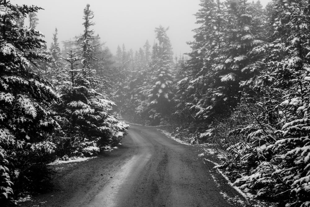 """Spring Snow"", by Christopher. Taken at Butterpot Provincal Park Newfoundland."