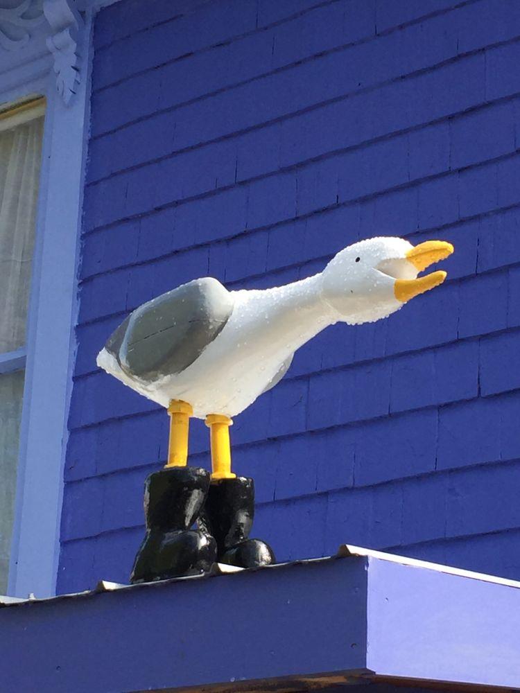 """""""Gulls Gotta Have Boots!"""", by Lori Nolt. Taken at Lunenburg, NS."""