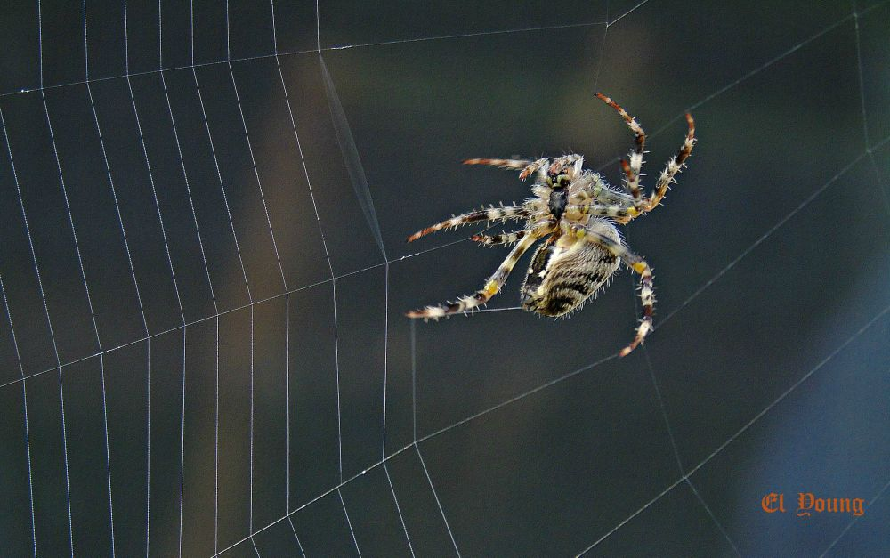 """Web Building"", by El Young. Taken at Oak Haven, N.B.."
