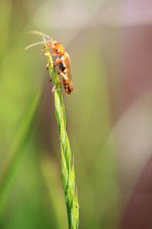 Grass Climbing by