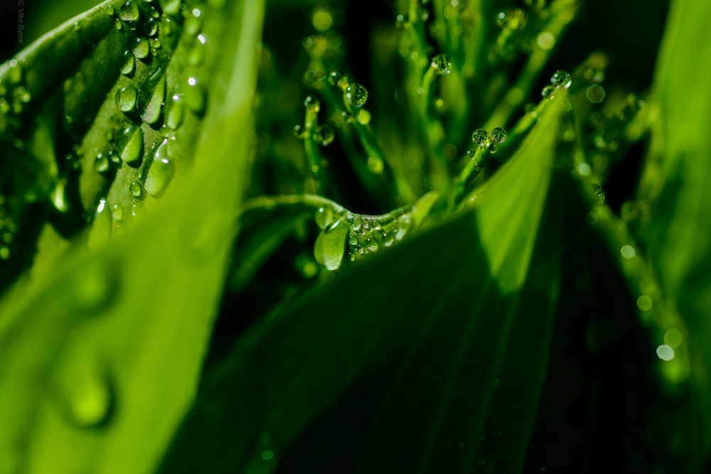 """""""Dew Drop In"""", by Mike Byrne. Taken at Pictou County, Nova Scotia."""
