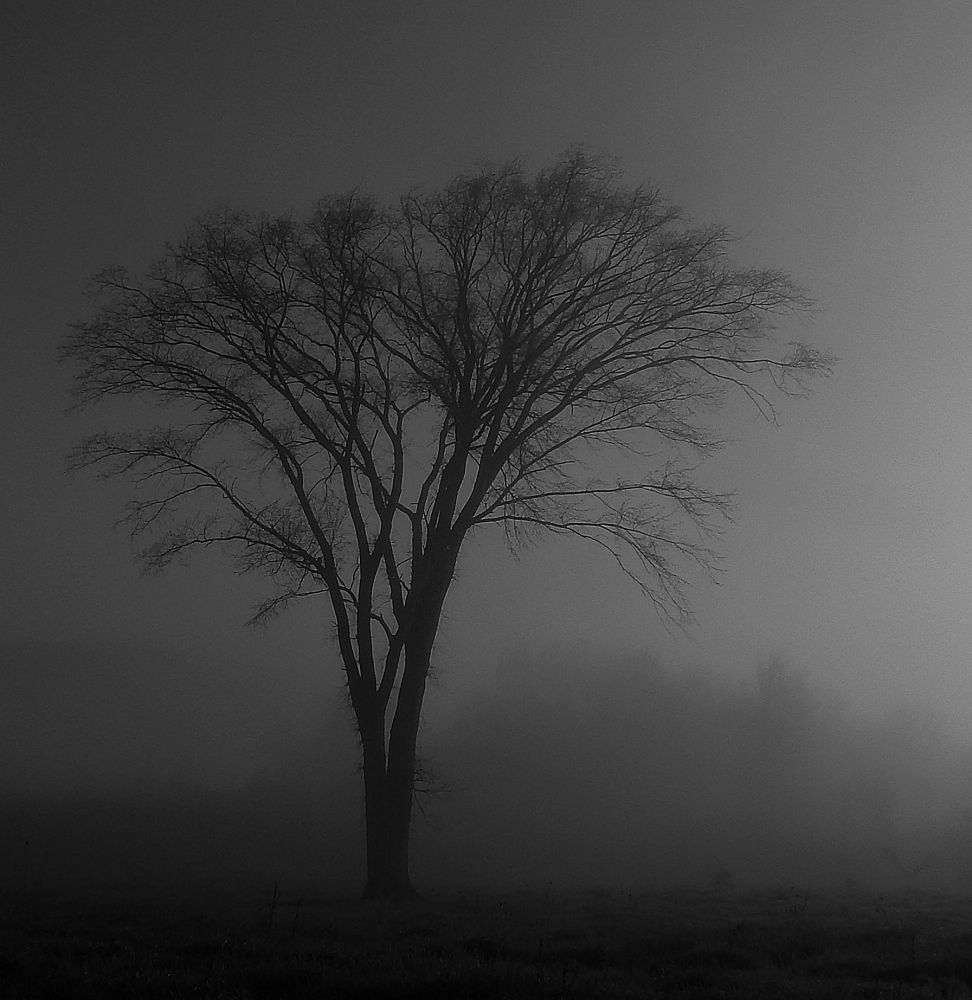 """Alone in the fog"", by Darlene Rafuse. Taken at Clarence, NS."