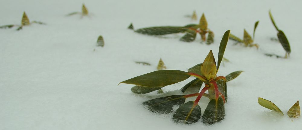 """Winter Winds"", by Abby Lorenz. Taken at UPPER TANTALLON."