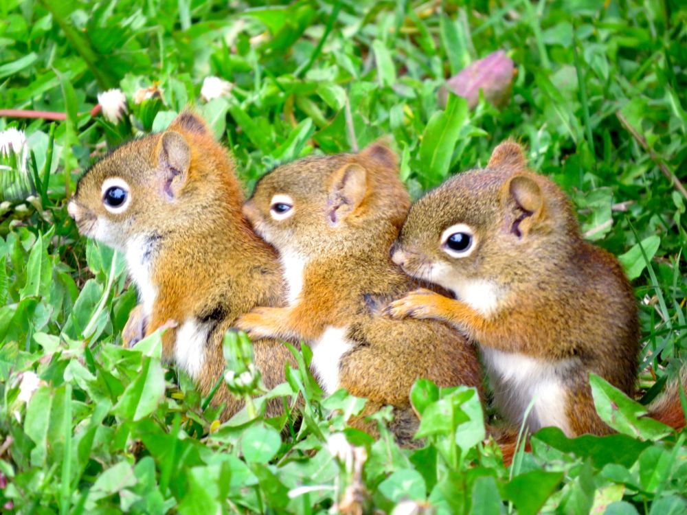 """Squirrel Siblings"", by Alicia Lewis."