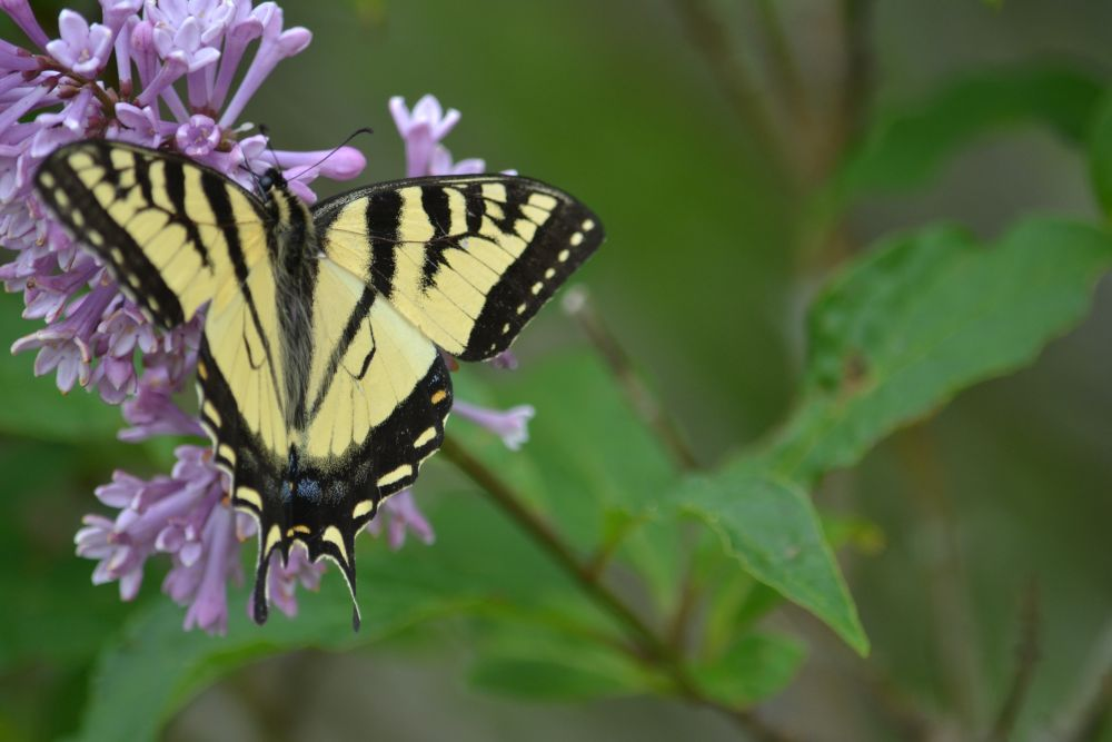 """""""The Butterfly"""", by barbara Sears. Taken at Sackville N.B.."""