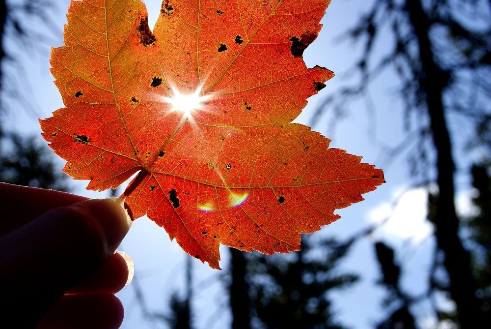 """Maple leaf shine"", by Margaret Keizer. Taken at Eastern Passage."