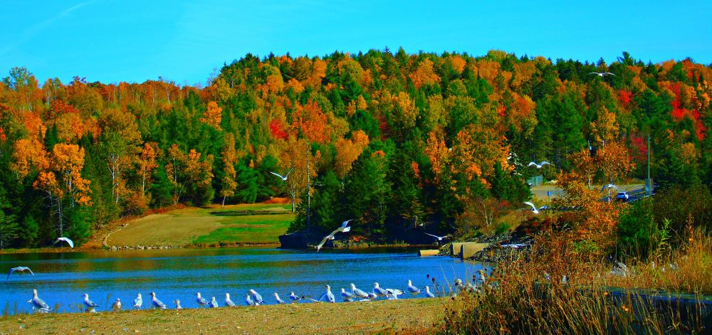 """""""Autumn Beauty"""", by Elva Young. Taken at Oak Bay, N.B.."""
