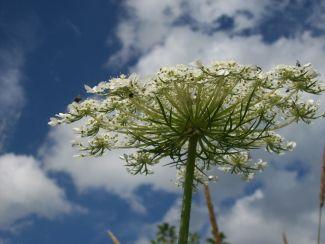 bloom's underside by