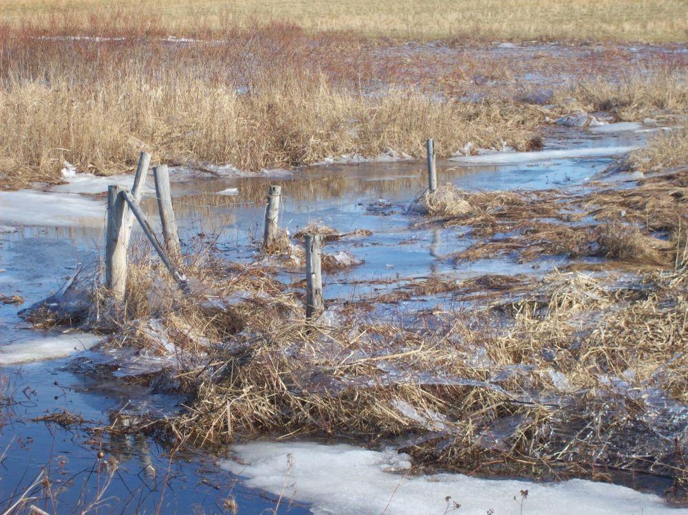"""""""marsh"""", by Ellen McFetridge. Taken at Middle Musquodoboit."""