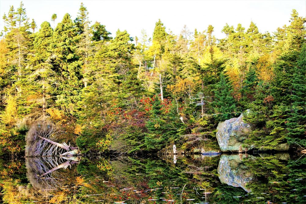 """""""Fall Reflections"""", by Virginia Coady. Taken at Manuals, Newfoundland."""