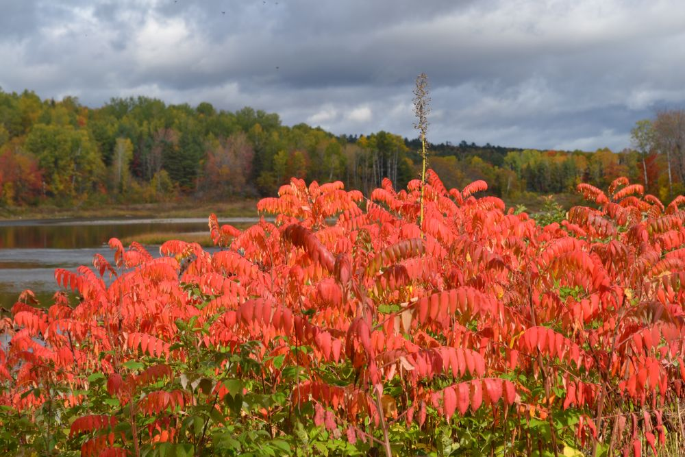"""Autumn Finery"", by Jackie Lyons. Taken at Fredericton NB."