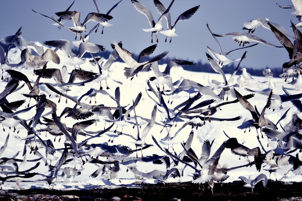 """""""Seagulls"""", by barbara Sears. Taken at Compost farm in Sussex."""