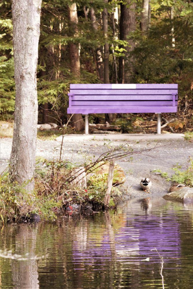 """Lavender Reflection"", by Kelly Donovan. Taken at Shubie Park, Dartmouth."