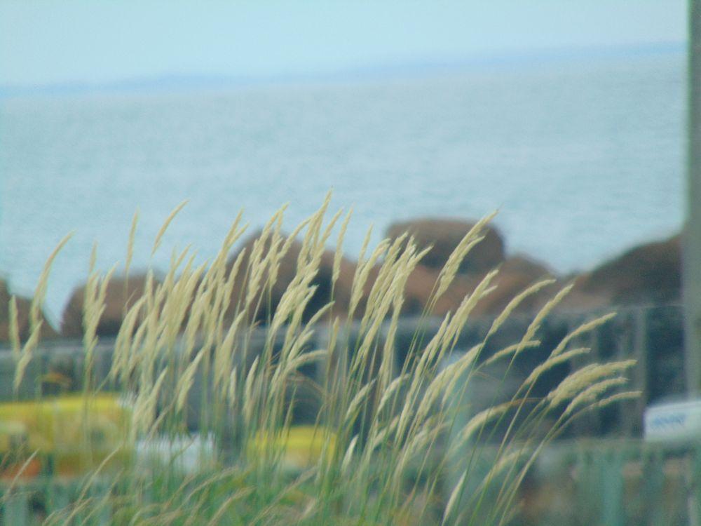 """Wharf grass"", by Kathy. Taken at Down at the wharf."