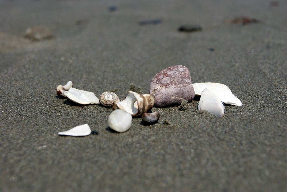 """Beach Finds"", by Margaret Keizer. Taken at Eastern Passage."