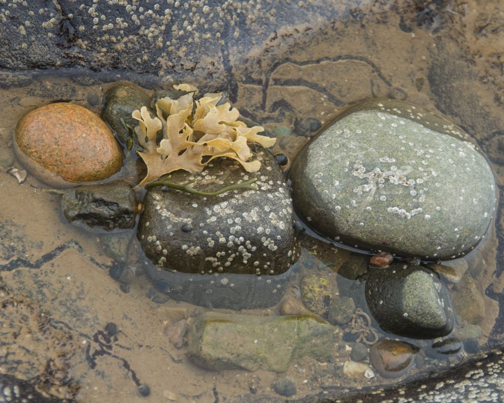 """""""Tidal Pool"""", by Gary Bowlby. Taken at Port George, NS."""
