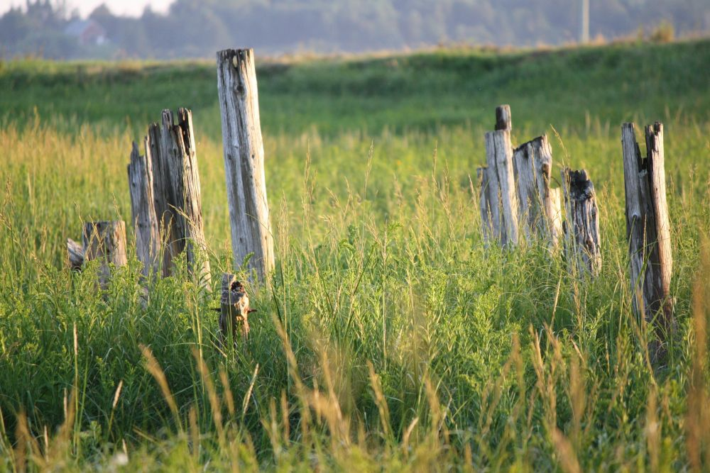 """""""On the marsh"""", by Melanie Colwell. Taken at Sackville NB."""
