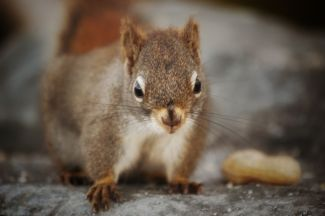 Posing for peanuts by