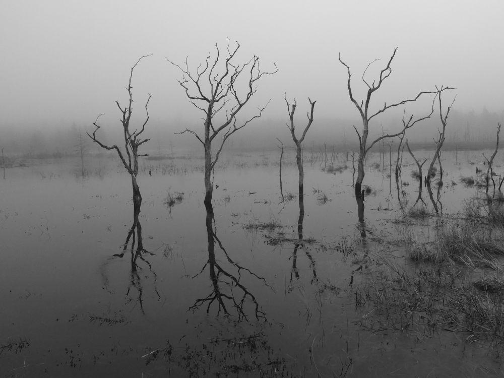 """""""Natures Mirror"""", by G. NEARING. Taken at Argyle N.S.."""