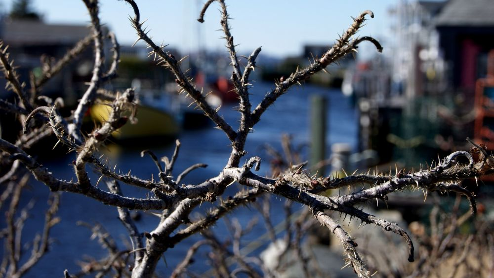 """Through the Branches"", by Margaret Keizer. Taken at Fisherman's Cove Eastern Passage."