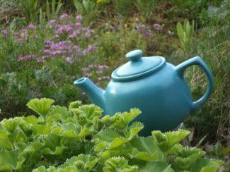 Tea Anyone? by