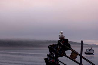 Evening Fog by