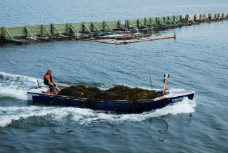 Rockweed Harvest by