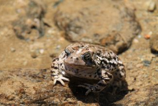 Posing Toad by