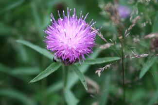 A weed is but a unloved flower- Ella Wheeler Wilco by