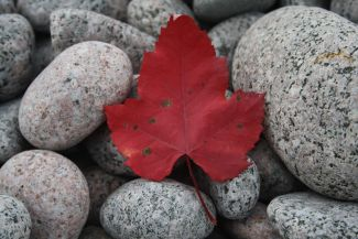 Autumn on the rocks by