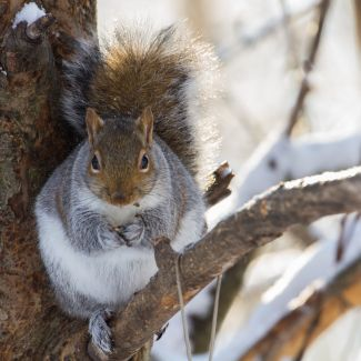 Chubby Squirrel with Bird Seed by