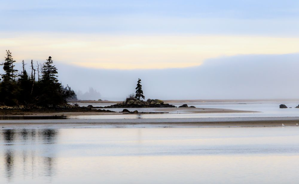 """Along the Salt Water Marsh Trail"", by Lynn Fergusson. Taken at Salt Water Marsh Trail Cole Harbour NS."