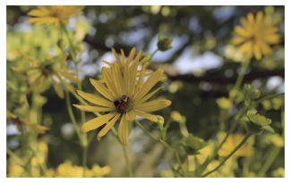 Halifax Public Gardens - On Kodak Portra 800 by