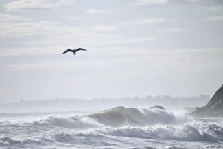 Seagull and Surf by