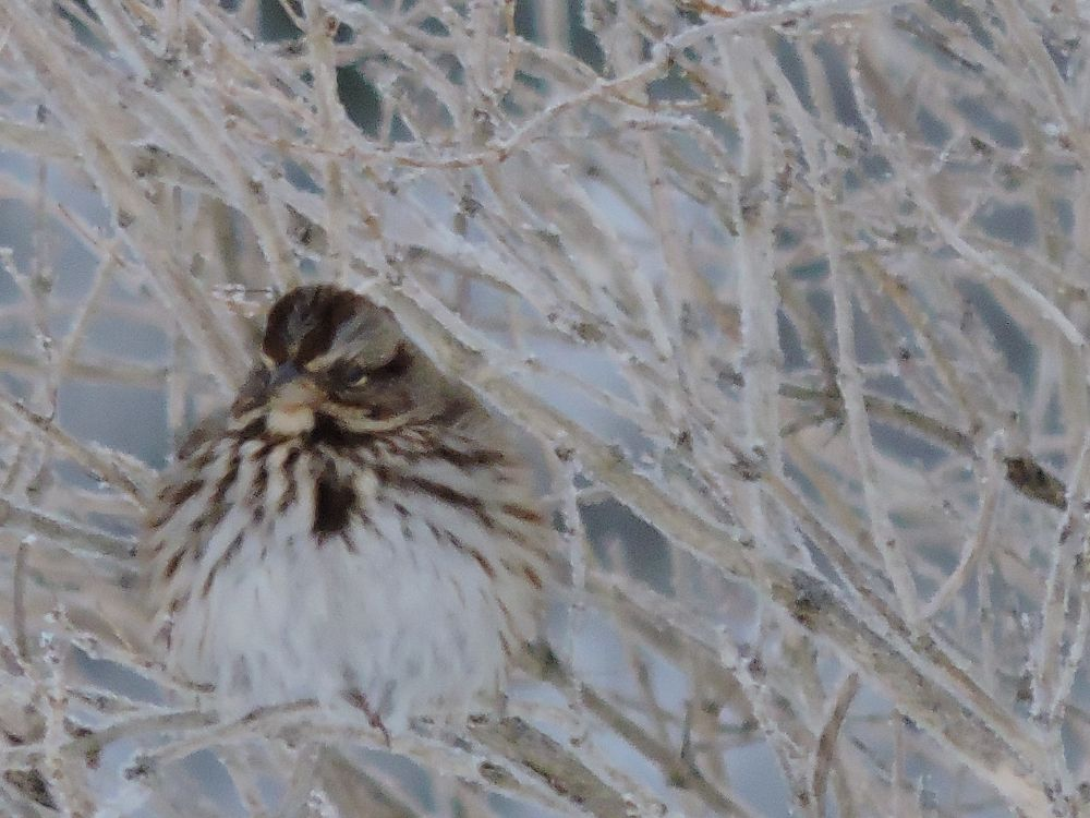 """""""Grumpy"""", by Barbara Ann Acker. Taken at Somerset."""