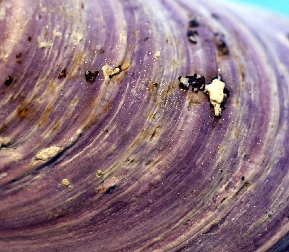 """Mussel Sparkle"", by MB Whitcomb. Taken at Baddeck, NS."