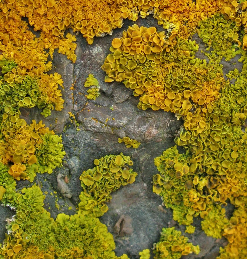 """Isle Madame Lichens"", by MB Whitcomb. Taken at Isle Madame, NS."